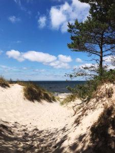 zdjęcie lasu z widokiem na plażę i morze Plaża w Rogowie
