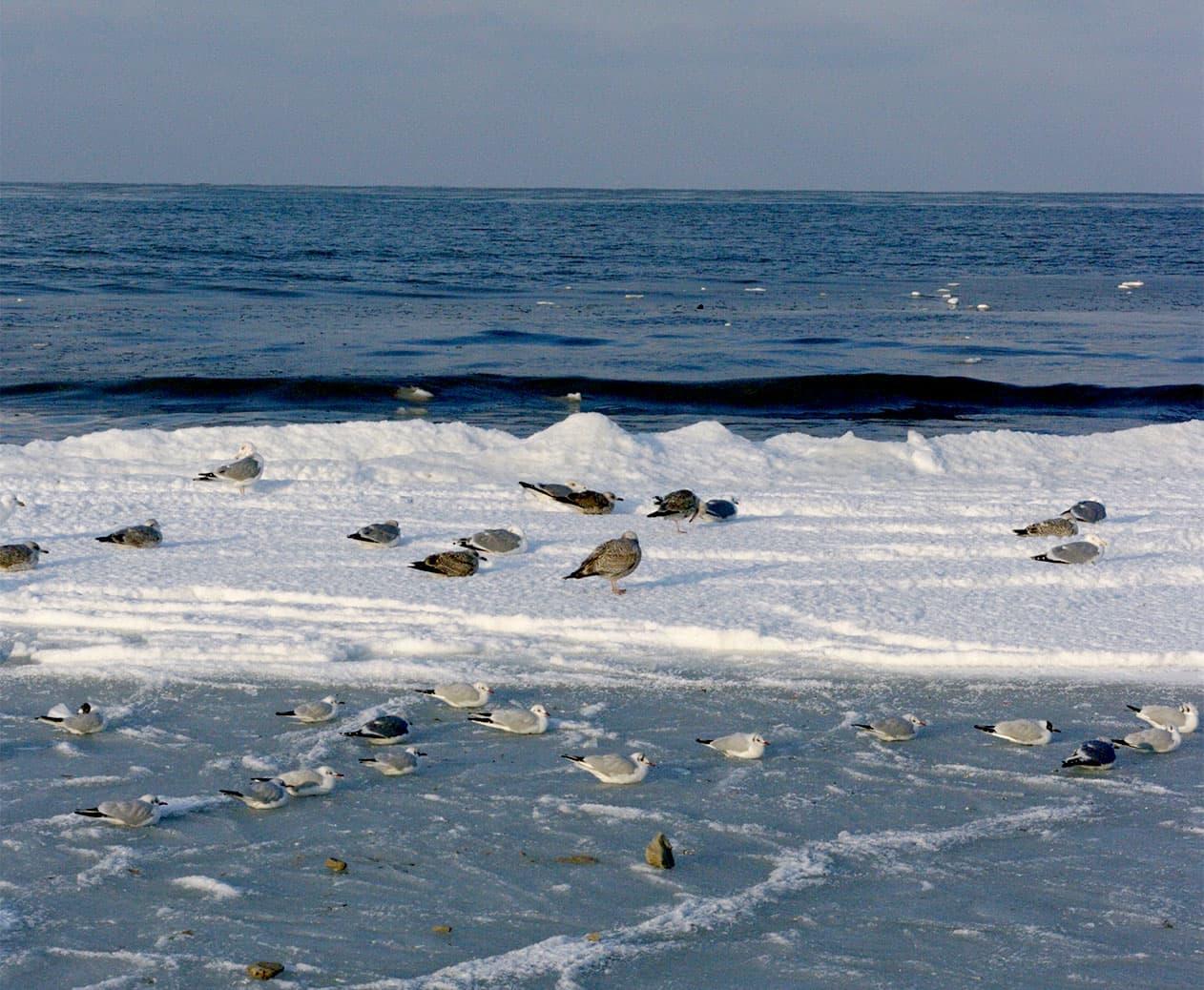Zimowe ptactwo przy brzegu