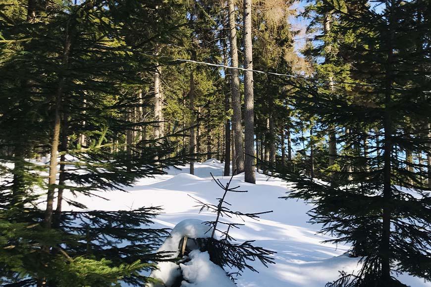 Widok nienaruszonego śniegu obok trasy narciarskiej Jakuszyce zdjęcie Sara Dziuba blog SunSeasons24