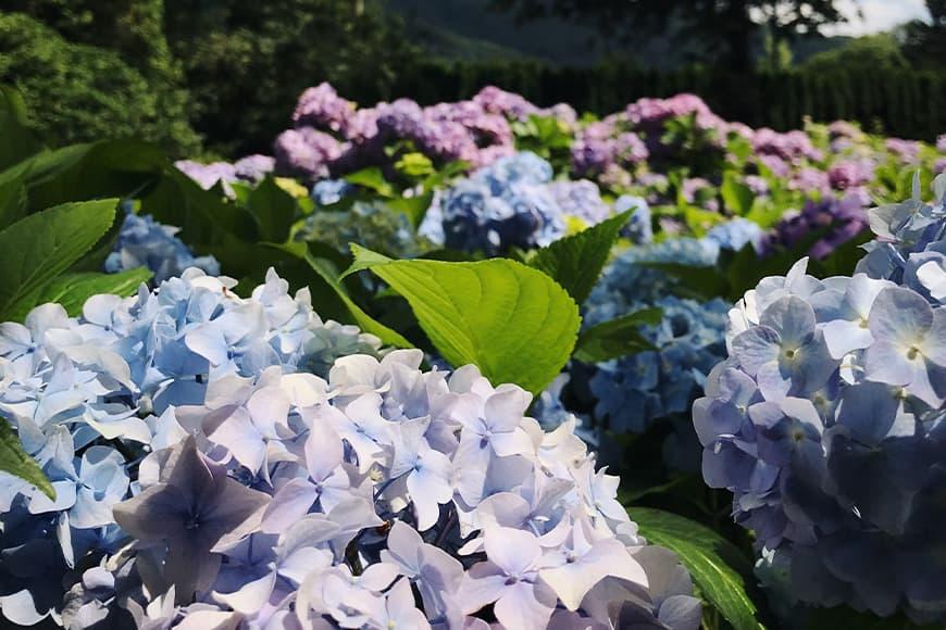 Kwitnący park w Ustroniu. Zdjęcie Sara. Blog SunSeasons24