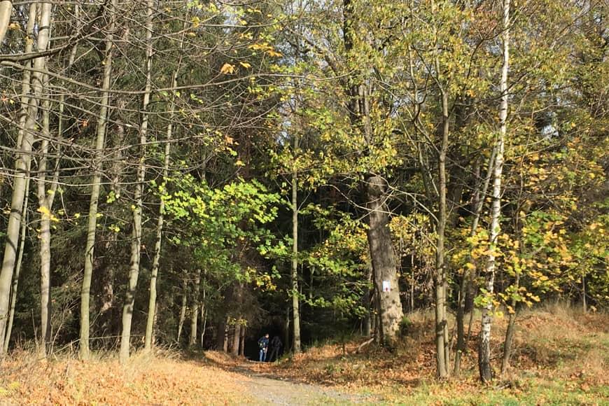 Ścieżka spacerowa w lesie. Zdjęcie Zbigniew Pasieka. Blog SunSeasons24