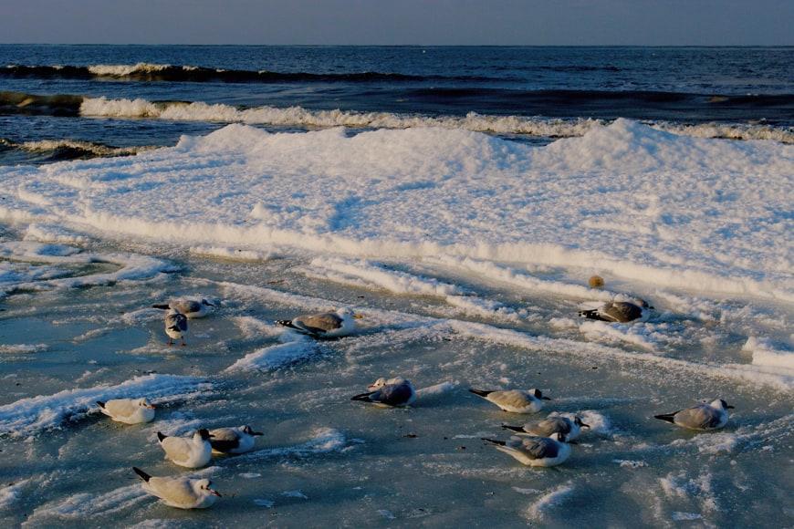 Ptaki na zimowej plaży w Kołobrzegu. Zdjęcie Sara. Blog SunSeasons24